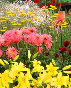 Многолетние цветы для сада в тени фото