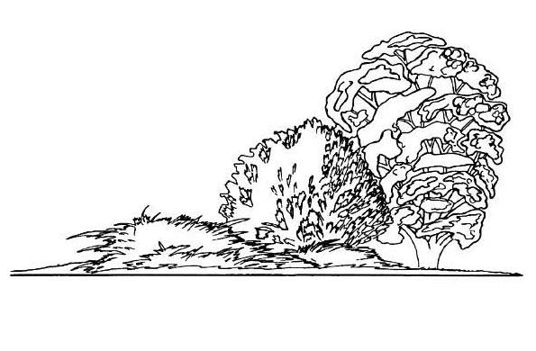 Приемы ландшафтного дизайна